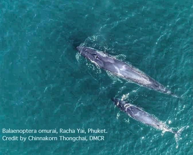 ภาพ - 2 แม่ลูกวาฬโอมูะ