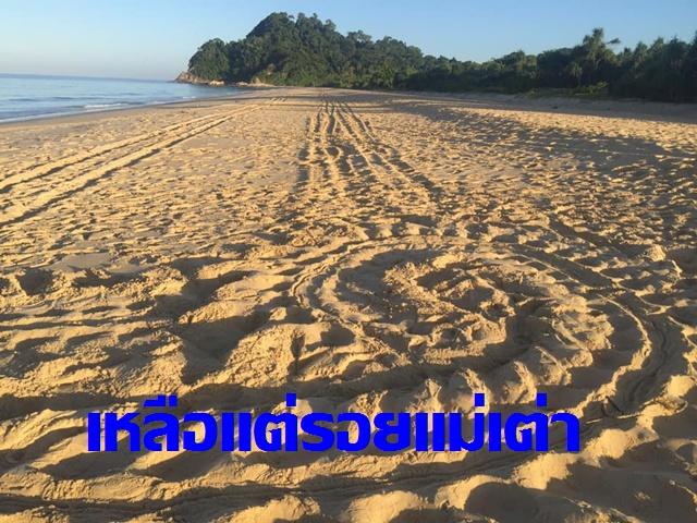 ไข่เต่ามะเฟืองถูกขโมย!!  ที่ชายหาดพังงา ตั้งรางวัลนำจับแล้ว 1 แสนบาท