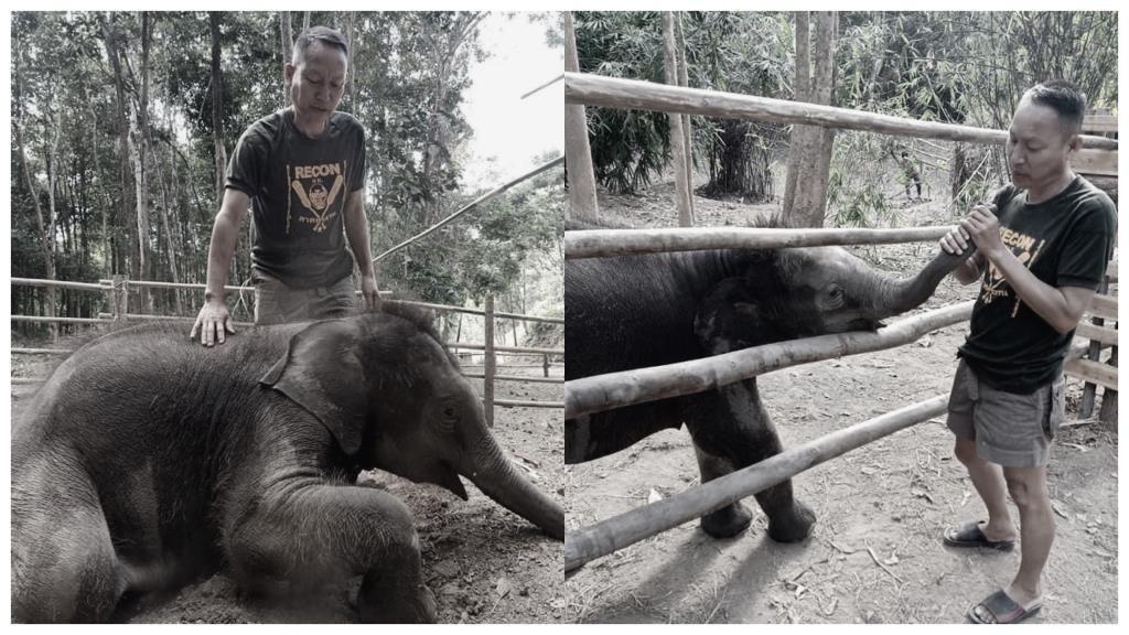 """ร่วมอาลัย! """"พ่อศรีของช้างน้อยทับเสลา"""" จนท.เขตรักษาพันธุ์สัตว์ป่าฯ หลังเสียชีวิตกระทันหัน"""
