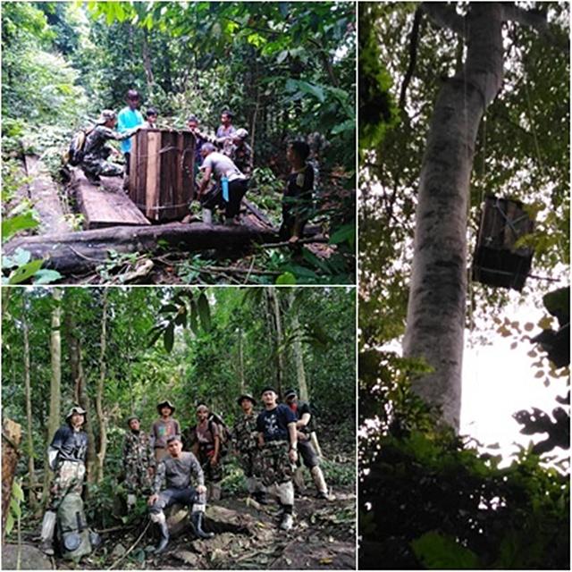 เพิ่มโพรงรังเทียม เพื่อนกเงือก ณ เขตอุทยานแห่งชาติบูโดสุไหงปาดี โดยชุมชนอนุรักษ์นกเงือกเทือกเขาบูโด