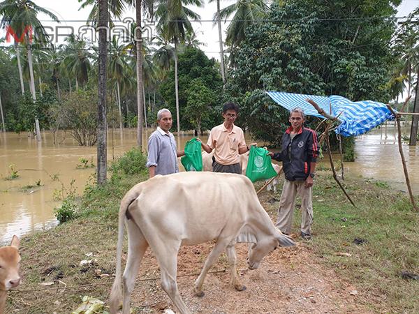 ปศุสัตว์ปัตตานีเร่งช่วยเหลือเกษตรกรผู้เลี้ยงสัตว์หลังประสบภัยน้ำท่วม