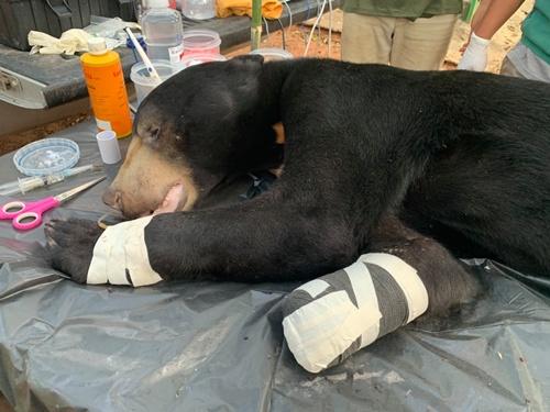 พ้นอันตราย ! ช่วยหมีหมาติดบ่วงดักสัตว์ ใกล้ป่าเขตอุทยานฯปางสีดา