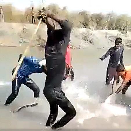 """""""โลมาแม่น้ำคงคา"""" ถูกรุมตีอย่างโหดร้าย วิดีโอบันทึกภาพชัด"""