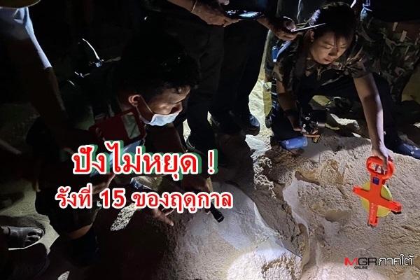 ปังมาก ! แม่เต่ามะเฟืองขึ้นวางไข่รังที่ 2 ของปี 64 รังที่ 15 ของฤดูกาล เชื่อยังมีอีก
