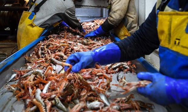 In Clip: พิษBREXITพ่น! EU สั่งห้ามนำเข้าอาหารทะเลจากบริษัทเล็กในสกอตแลนด์