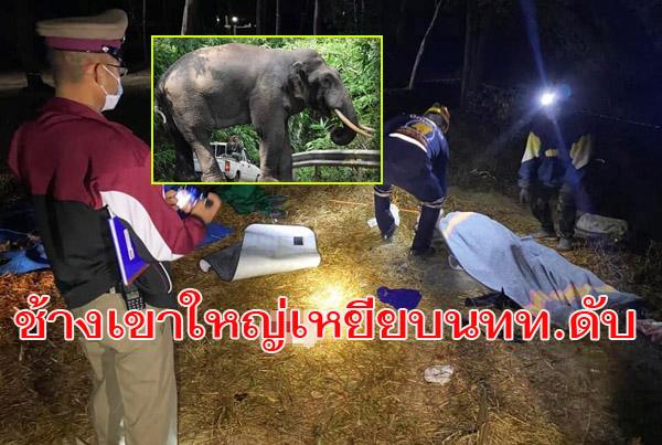 """สลด! """"พลายดื้อ""""ช้างป่าเขาใหญ่อาละวาดบุกรื้อเต็นท์เหยียบนักท่องเที่ยวร่างเละดับคาที่ คาดตกมัน-สั่งปิดจุดกลางเต็นท์"""
