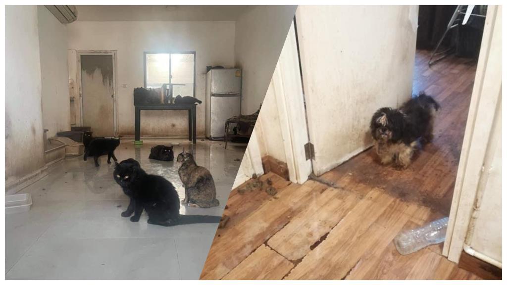 สลด! พบผู้เช่าบ้านทิ้งแมวกว่า 20 ชีวิต สุนัข 1 ตัว ในบ้านตามยถากรรมนานหลายเดือน