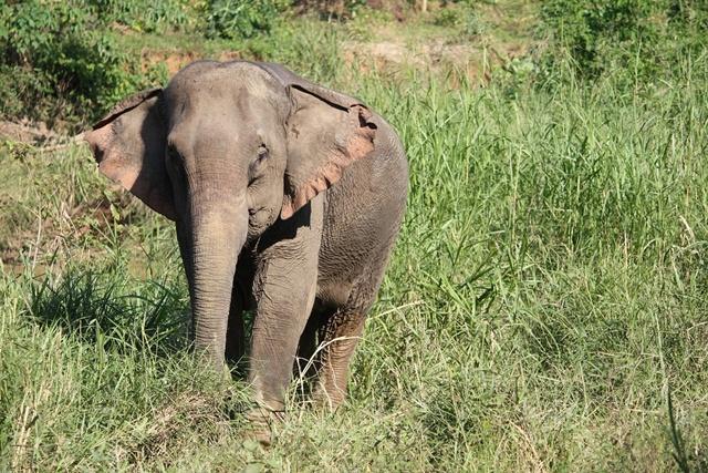 """เปิดทุนปางช้างทั่วประเทศสู้วิกฤติโควิด ผ่านโครงการ """"พรุ่งนี้ที่ดีกว่าของช้าง"""""""