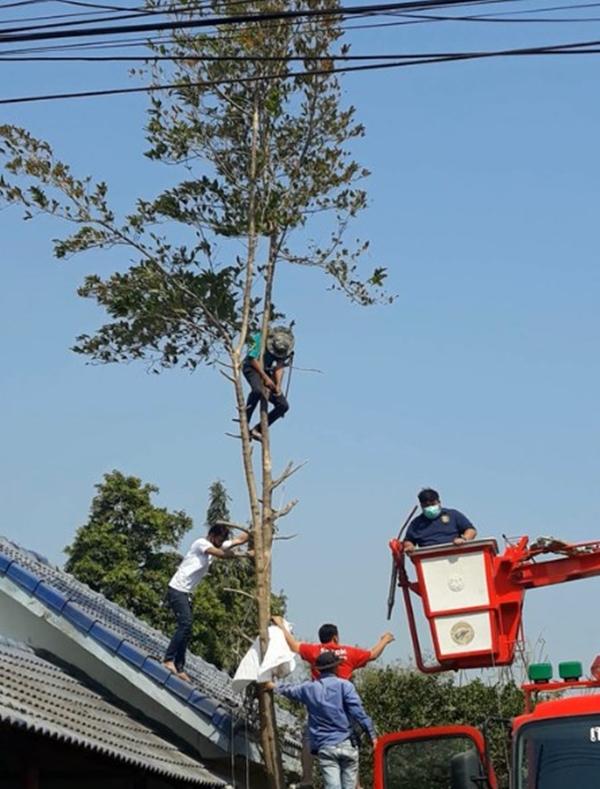 หวาดเสียว!! พบหนุ่มใหญ่เป็นลมคอพับห้อยติดอยู่บนต้นไม้สูงกว่า 10 เมตร