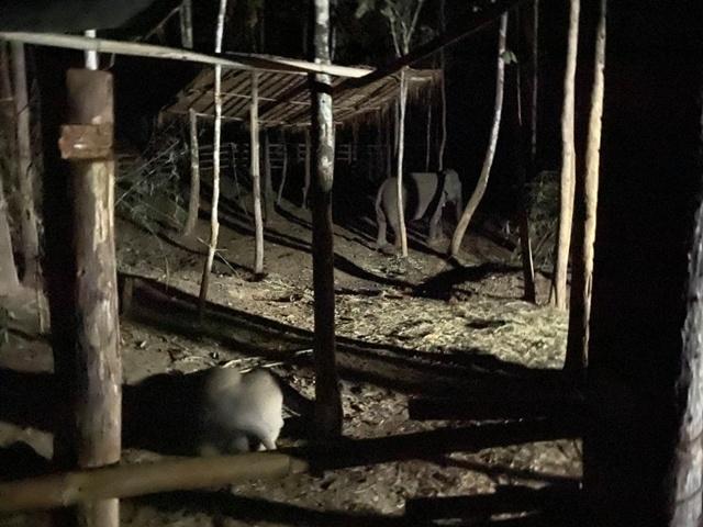 ตอนนอน ยังคุ้นชินกับการนอนโดยลำพัง อยู่ห่างแม่ช้างประมาณ 10-15 เมตร