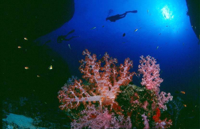 แหล่งดำน้ำลึกหมู่เกาะสิมิลันสวยงามติด 1 ใน 10 ของโลก
