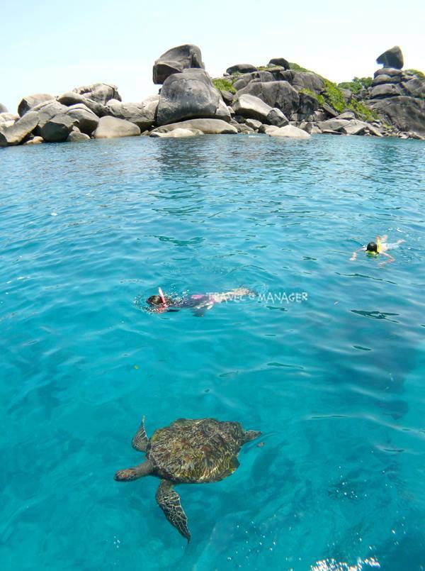 วันไหนโชคดีจะมีเต่าทะเลมาปรากฏกายในขณะดำน้ำ
