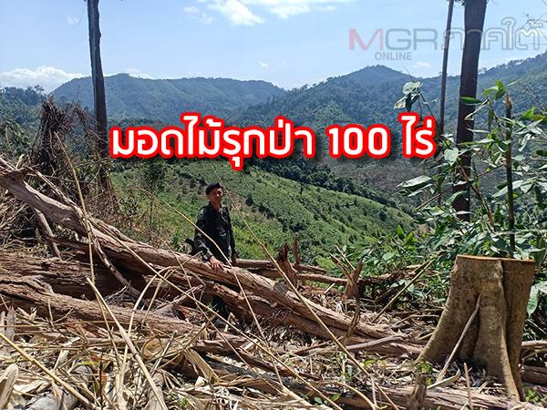 มอดไม้เหิมเกริมรุกป่าบนเทือกเขาสันกาลาคีรีชายแดนไทย-มาเลเซียกว่า 100 ไร่