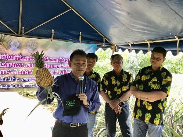 เกษตรภูเก็ตเร่งเพิ่มคุณภาพการปลูกสับปะรดภูเก็ต ให้ผ่านเครื่องหมาย GI-มาตรฐาน GAP ดันขายในห้างสรรพสินค้า