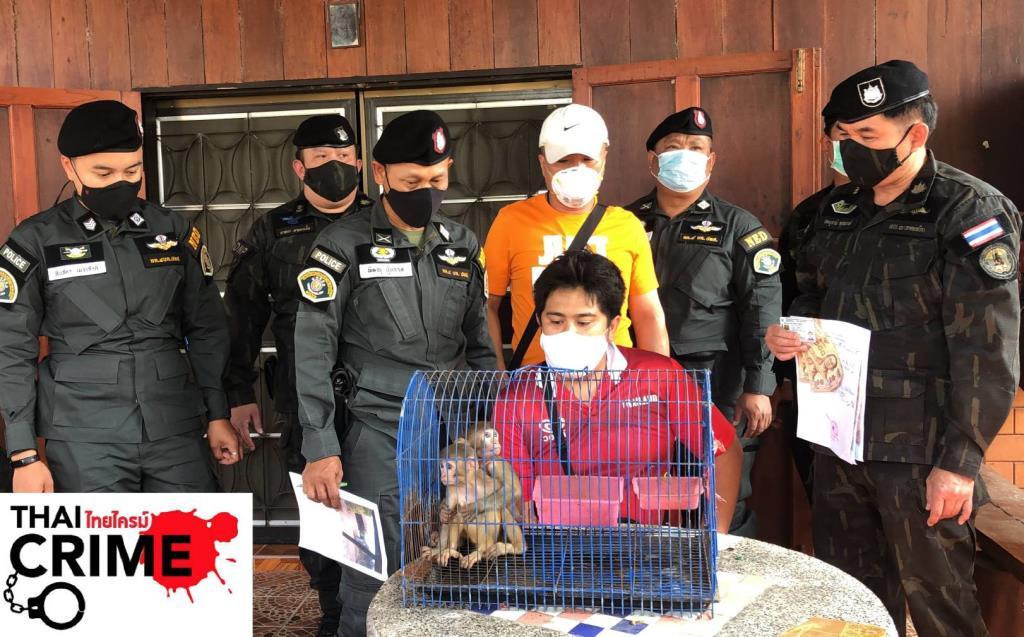 ปทส.จับหนุ่มเมสเซนเจอร์ลักลอบขายลูกลิงวอกในเพจฯ