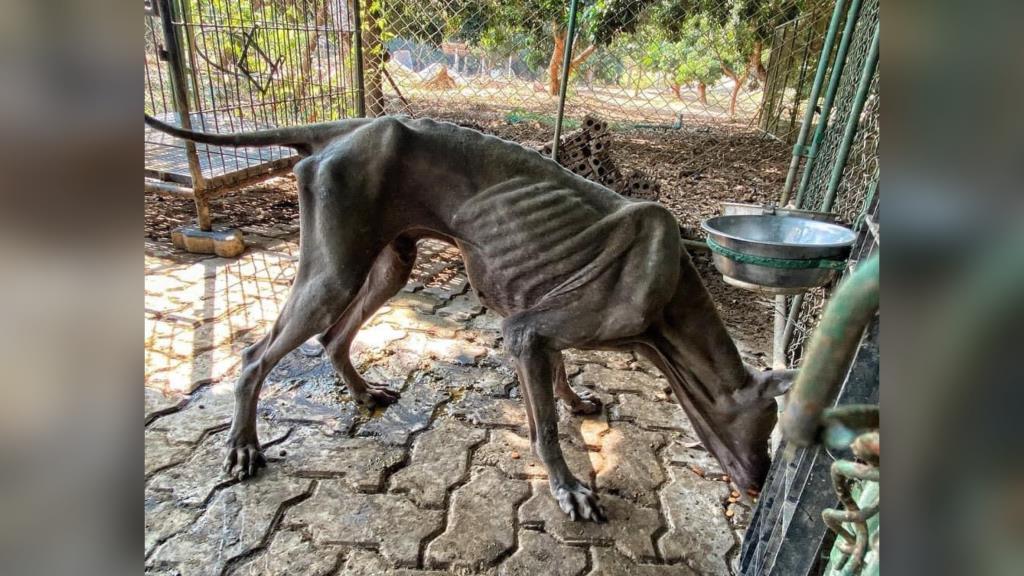 """""""วอชด็อก"""" แฉจนท.รัฐกีดกัน ช่วยสุนัขหลังอานถูกทารุณจากฟาร์มเถื่อนเชียงใหม่"""