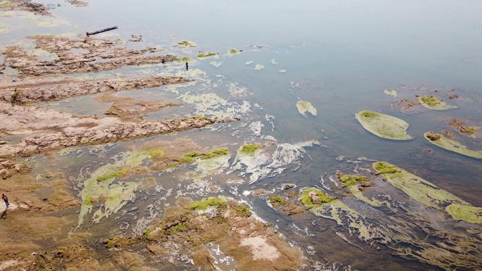 ชาวหนองคาผวา!น้ำโขงลดฮวบตะไคร่น้ำโผล่กระทบจับปลาน้ำโขง-ปลากระชังน็อกตาย