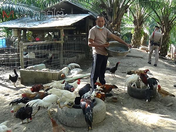 สุดยอดนายดาบจอมขยันใช้เวลาว่างทำเกษตรผสมผสานและเลี้ยงไก่ชนขายออนไลน์ถึงเขมร