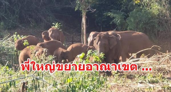 เตือนประชาชนเฝ้าระวัง ช้างป่าออกนอกพื้นที่ป่า คาดว่าเป็นการหาแหล่งที่อยู่และแหล่งหากินใหม่