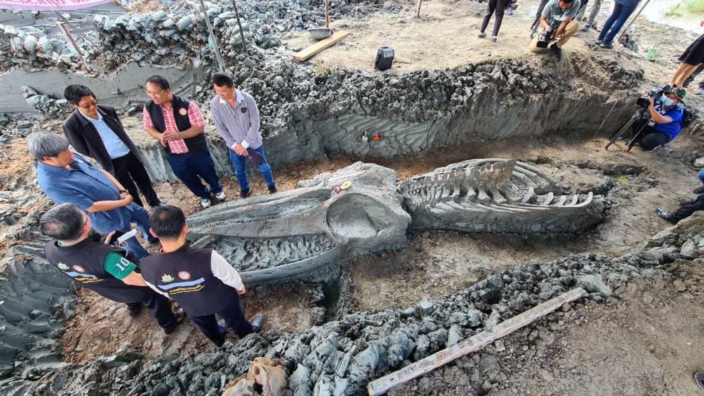 """""""กรมทรัพยากรธรณี"""" เผยปริศนาโครงกระดูก """"วาฬอำแพง"""" มีอายุ 3,380 ปี ที่ขุดพบในพื้นที่ จ.สมุทรสาคร"""