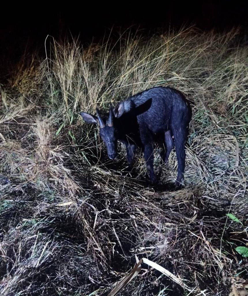 กรมอุทยานฯ แจ้งจับนักซิ่งชนสัตว์ป่าแล้วหนี โทษจำคุก 15 ปี ปรับ 1.5 ล้านบาท