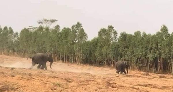 เตือนชาวบ้านเขตรอยต่อสระแก้ว – ปราจีนบุรี ระวังอันตรายจากช้างป่า