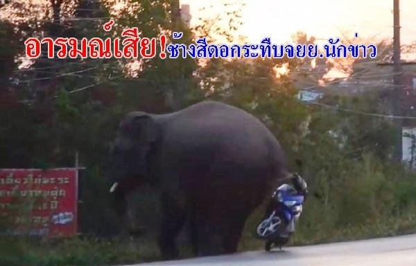 อารมณ์เสีย! ช้างป่าสีดอเขาอ่างฤาไน กระทืบ จยย.นักข่าวพังยับเหตุไม่พอใจติดตามเก็บภาพ