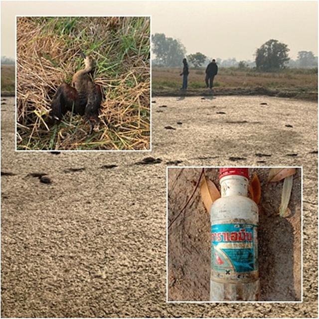 ในเบื้องต้น กรมอุทยานฯ ชี้สาเหตุมาจากสารเคมีเกษตร ยาฆ่าหญ้า