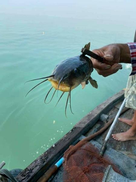 ปลาดุกทะเล อาหารสุดโปรดของโลมา