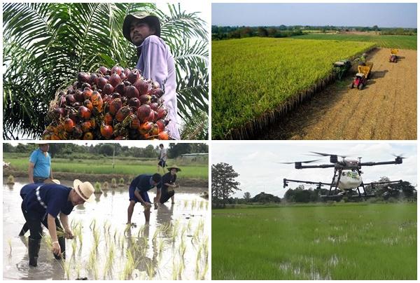 ส่องอนาคตภาคเกษตร!คนรุ่นใหม่ควรสานต่อหรือจบแค่รุ่นพ่อแม่