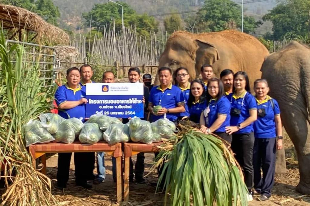 """""""วิริยะประกัย"""" ร่วมอนุรักษ์ช้างไทย"""