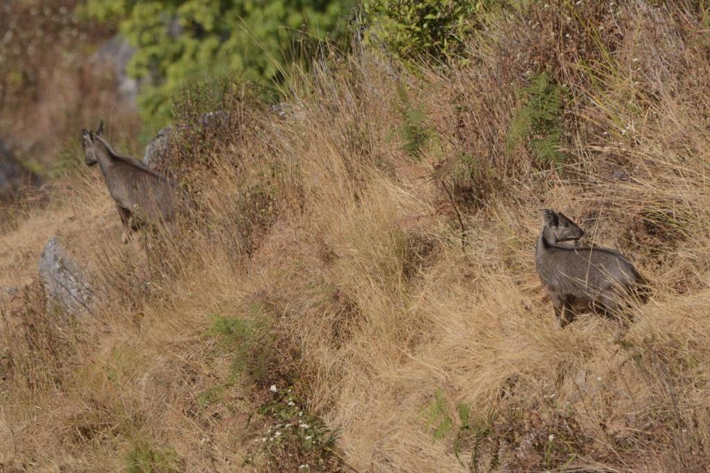 ภาพจากเพจเฟซบุ๊กประชาสัมพันธ์ กรมอุทยานแห่งชาติ สัตว์ป่า และพันธุ์พืช