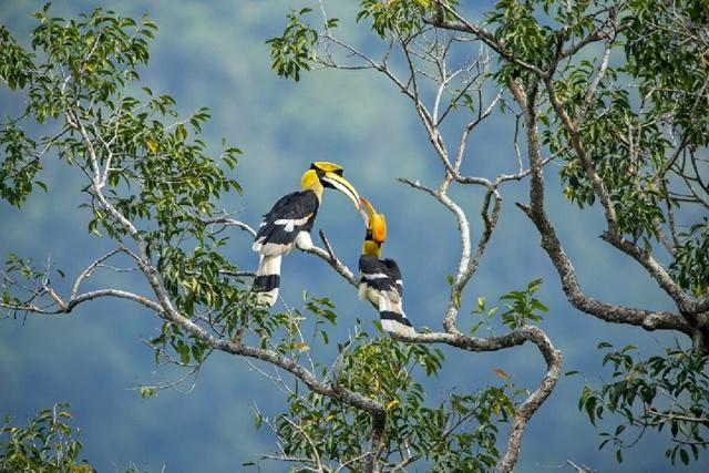 13 กุมภาพันธ์ วันรักนกเงือก  รู้จักนกปลูกป่า 13 ชนิดในประเทศไทย