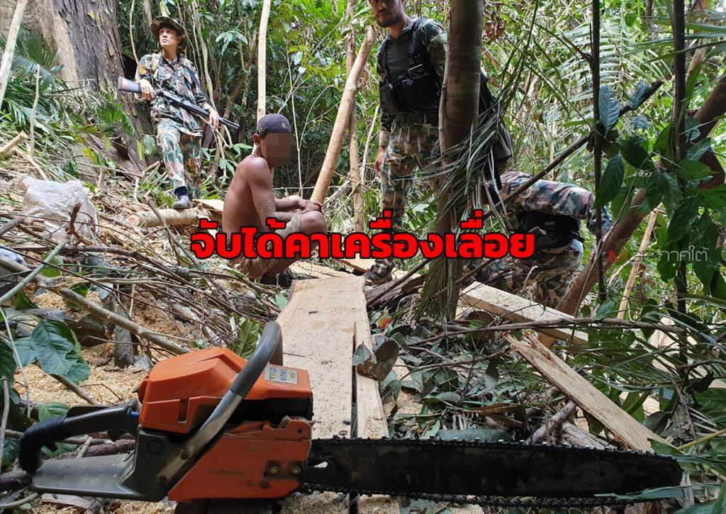 บุกจับกุมลักลอบตัดไม้ในพื้นที่ป่าต้นน้ำแม่น้ำสายบุรี พบนำแปรรูปเป็นเฟอร์นิเจอร์ขาย