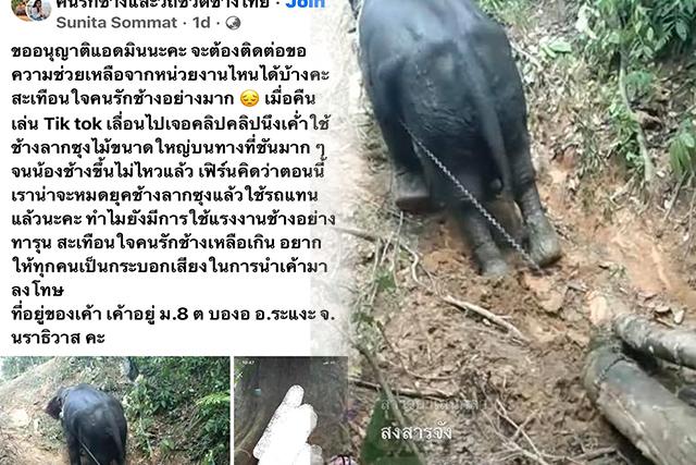 คนรักช้างทนไม่ได้! พบคลิปช้างลากซุงสุดทรมาน ผู้ประกาศข่าวดังประสานช่วยเหลือแล้ว