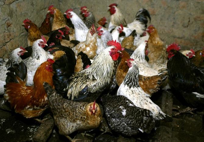 อะไรกันอีก!รัสเซียรายงานพบไข้หวัดนกH5N8แพร่จากสัตว์สู่มนุษย์เคสแรกของโลก