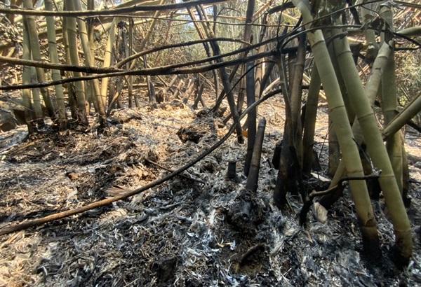 สถานการณ์ไฟป่าชายแดนบ้านมะม่วง จ.ตราด สงบแล้ว แต่ จนท.ยังเฝ้าระวังต่อเนื่อง