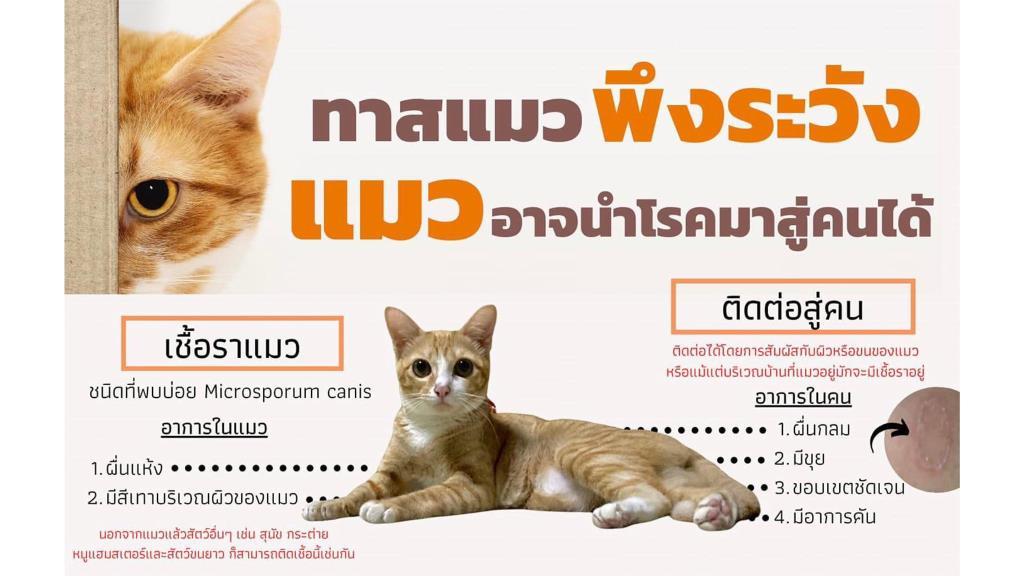 แพทย์ผิวหนังเตือน! เหตุสาวติดเชื้อราจากแมว แนะนำแมว-สุนัข ฉีดวัคซีนป้องกันเชื้อราได้