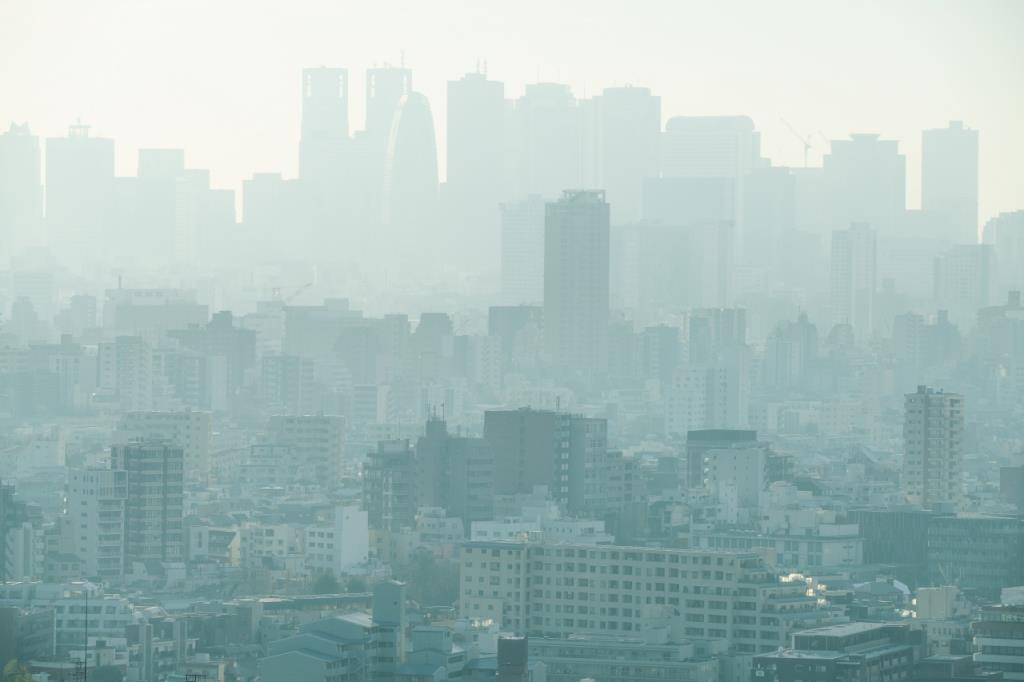 หว่านพืชหวังผล ปลูกต้นไม้ลด PM 2.5