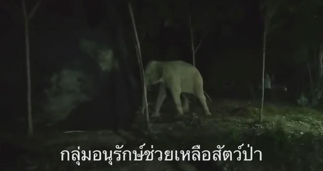 หมอช้างเก่งจริง! แม่ช้างป่าพวา ฟื้นแล้ว!! พอเดินได้ออกตามหาลูกทันที