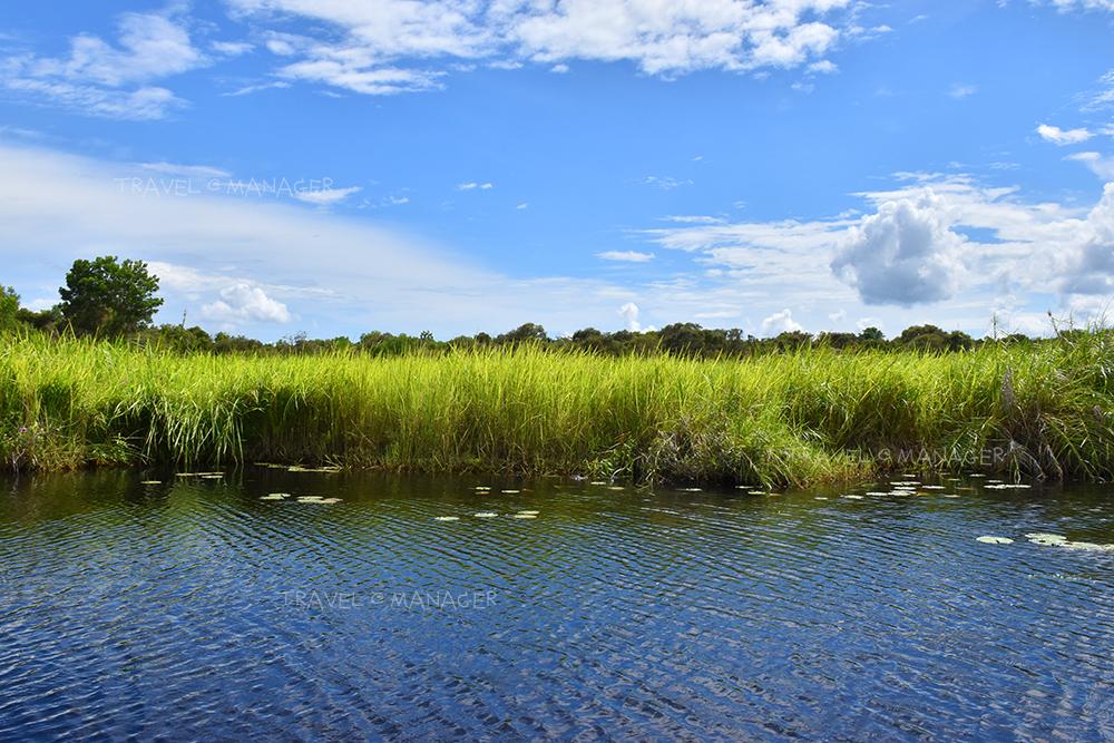แพหญ้าหนังหมา ลอยอยู่บนผืนน้ำ