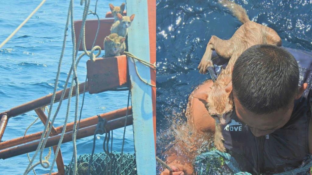 ประทับใจ! ทหารเรือเข้าช่วยแมว 4 ตัว จากเรือประมงถูกไฟไหม้จมกลางทะเล