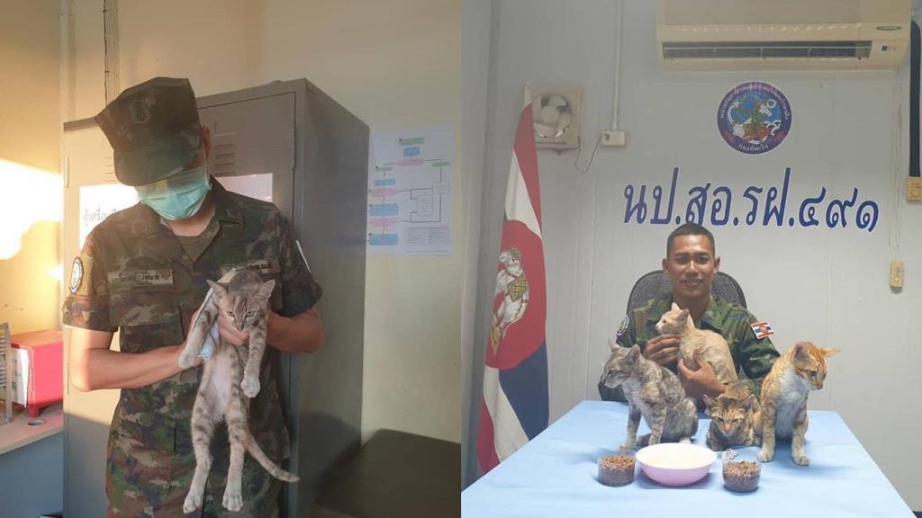 ทาสแมวหายห่วง! ทหารเรือเลี้ยงแมว 4 ตัว จากเหตุเรืออับปางเพราะไฟไหม้ปลอดภัยดี