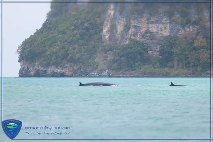 ภาพจาก อช.แห่งชาติหมู่เกาะอ่างทอง