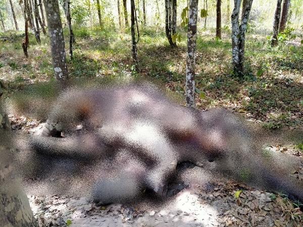 สลด!! ลูกช้างป่ากุยบุรีอายุ 1-2 ปี นอนตายในแปลงปลูกต้นตะเคียนทอง