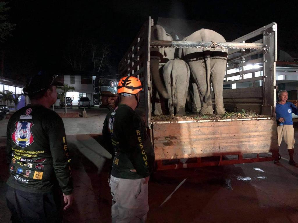 เร่งช่วยช้าง5เชือกอมก๋อยกินหญ้าปนเปื้อนสารพิษอาการหนักส่งรักษา รพ.ช้างลำปาง