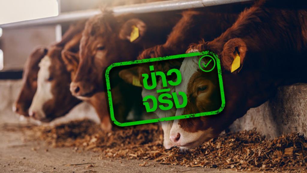 ข่าวจริง! กระทรวงเกษตรฯ ยกเว้นและลดค่าธรรมเนียม ใบอนุญาตนำเข้า-ส่งออก สัตว์และซากสัตว์