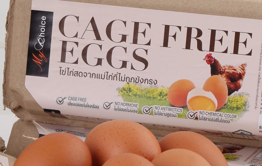 """""""เซ็นทรัลฟู้ด""""สนับสนุนAnimal Welfare  เพิ่มสัดส่วนขายไข่ไก่เคจฟรี50%ในปี68"""