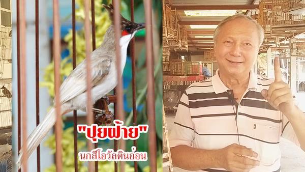 """ฮือฮา!ยอดเซียน""""เฮียปิก สุโขทัย""""เผยเคล็ดเพาะ""""นกเผือกตาแดง""""ตัวละ 150,000 บาทฟรีไม่มีหมกเม็ด"""