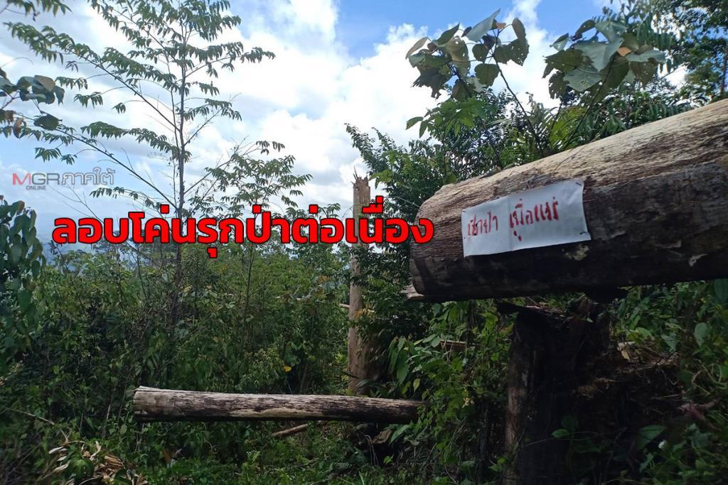 ตรวจยึดป่าต้นน้ำเหนือทะเลสาบเขื่อนบางลาง จ.ยะลา หลังรับแจ้งถูกบุกรุกต่อเนื่อง